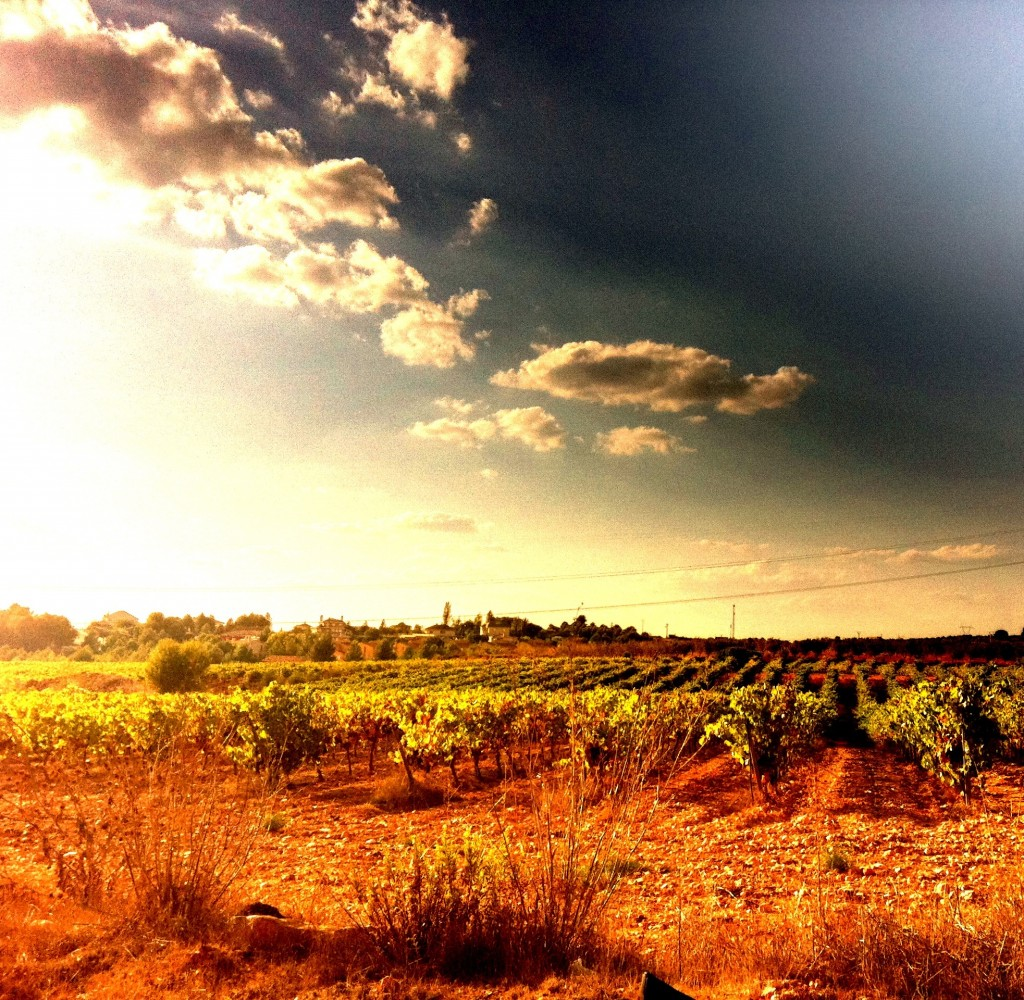 IMG 2933 1024x1000 Feature: Decanted and Decoded: Spanish Wine in a Nutshell