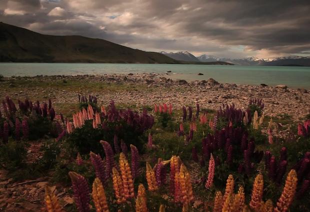 Travel to beautiful New Zealand - Video