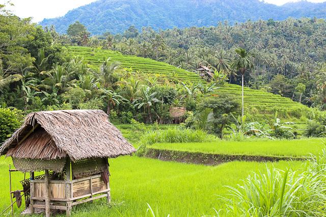 East Bali - Alila Manggis Rice Terraces