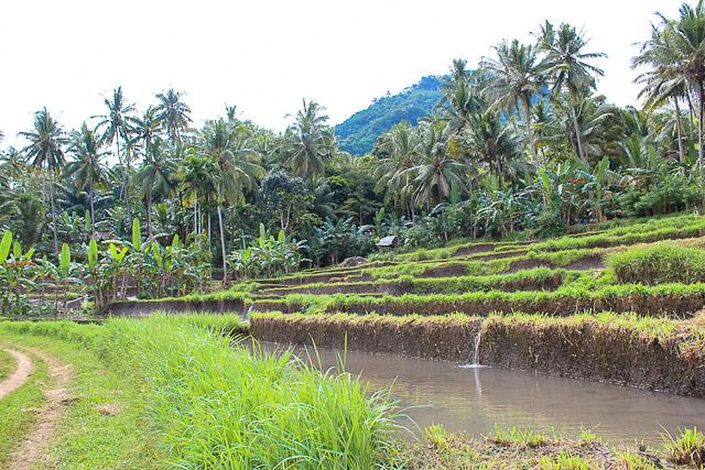 East Bali - Alila Manggis Rice Terraces - Organic Farming