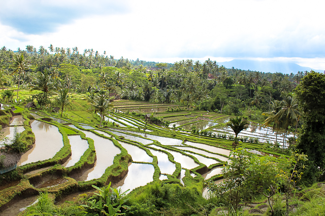 Rice Terraces of East Bali