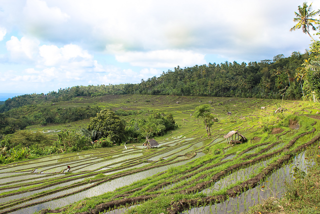 rice terraces in tenganan bali