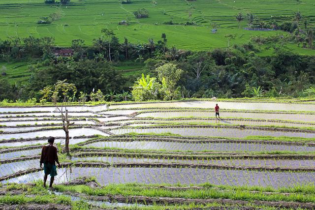 IMG 3771 Bucolic Bali (PHOTOS)