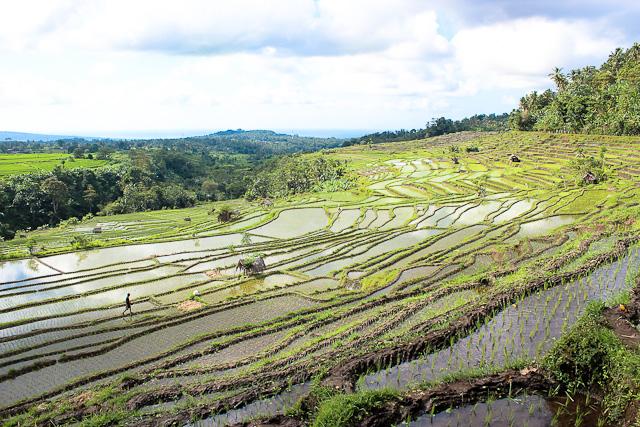 IMG 3798 Bucolic Bali (PHOTOS)