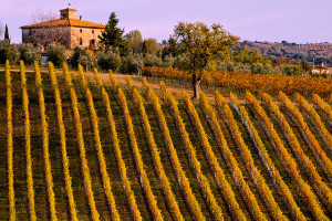 The hills of Tuscany - Chianti