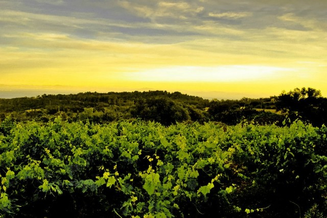The Best Biodynamic and Organic Wineries Around the Globe