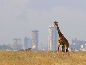 280px Giraffe   Skyline   Nairobi   Park1 Get Cultured: Nairobi    A Guide to the Cultural Heart of Kenya
