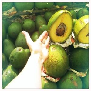 giant avocados lima