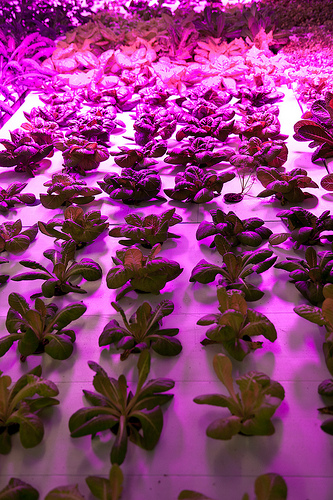 urban farming The Plant