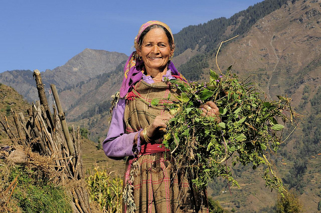 Farmer near Himachal Pradesh, India