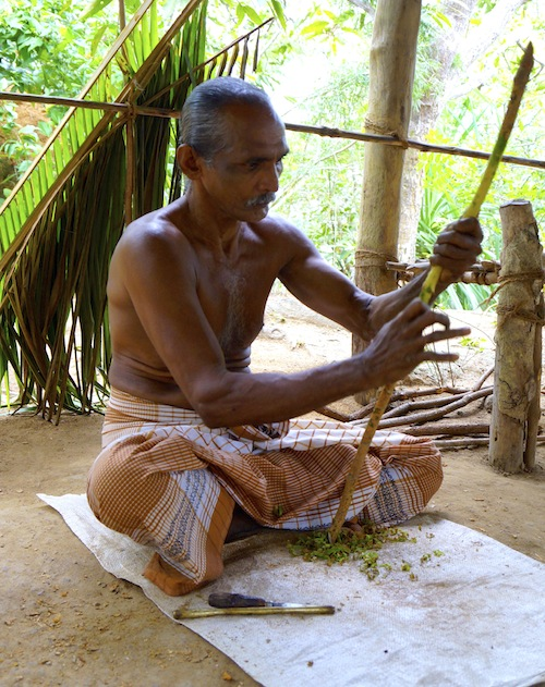 Vidurasena shaving the outer layer of cinnamon bark