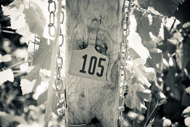 Irrigation Hose, Vintage Vineyard