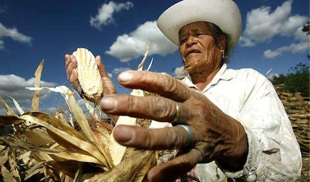 mexico farmer