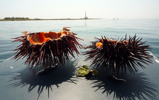 sea urchin italy e1370216068267 25 Ultra Local Experiences in Italy