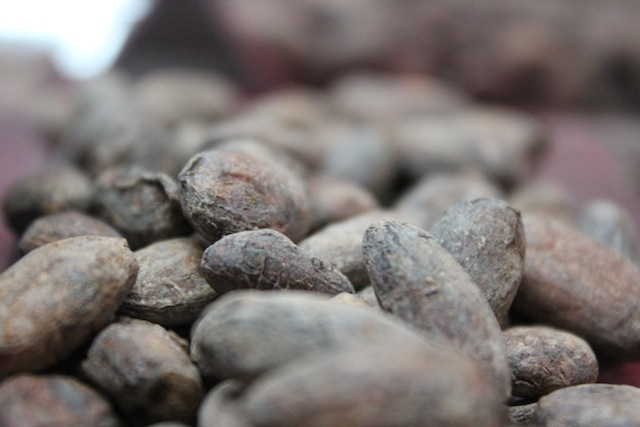 MOHO Chocolate - Roasted Cacao Beans