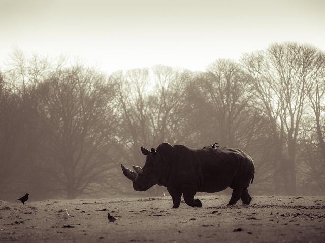 Rhino poaching kenya