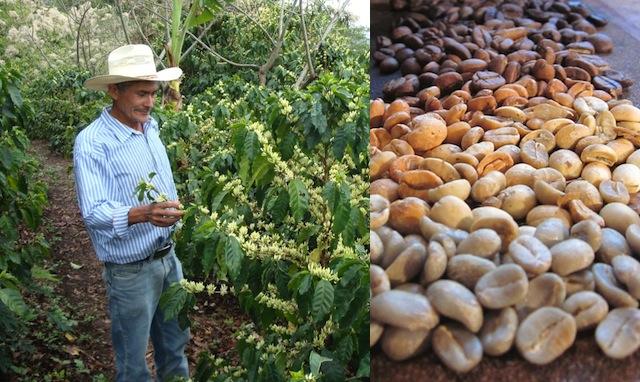 Thrive Coffee Farner
